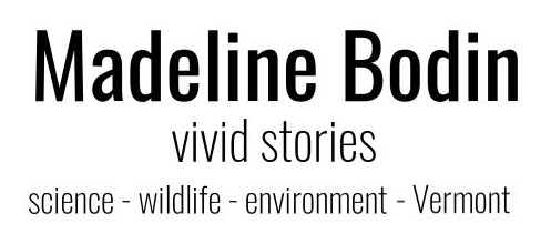 Madeline Bodin | Science writing